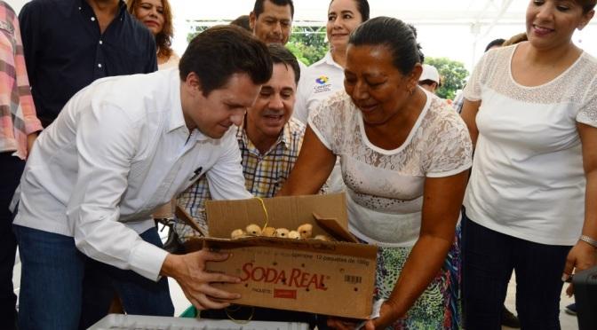 Primeras 2 mil pollas ponedoras para apoyar economía  de familias en Centro