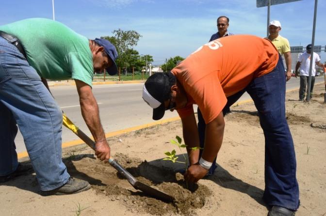 Dan vida al periférico con plantación de árboles
