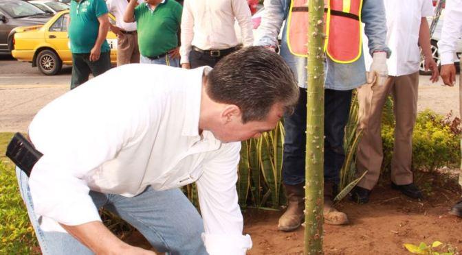 Arranca Programa de Reforestación en Centro