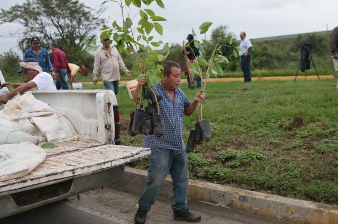 Reforesta Evaristo periférico y avenidas con árboles maderables y frutales